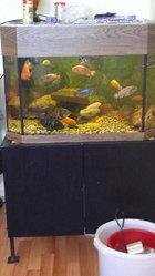 Продам аквариум на 180 и 250 л