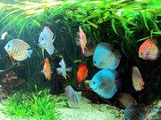 Для маленьких исследователей подводного мира