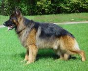 Veterinariya.info Портал о домашних животных, максимум информации