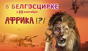 Продам 2 билета в цирк. Программа Африка 14.10 19 00.