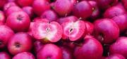 Саженцы яблонь с красной мякотью сорта Эра и Сирена.