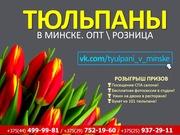 Тюльпаны из Голландии. Крупный и мелкий опт