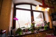 Окна пвх (ARtec,  KBE) и деревянные окна
