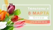 Цветы. Голландские Тюльпаны к 8 марта оптом от производителя.