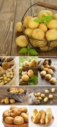 Качественный,  чистый картофель