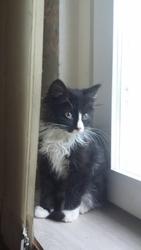 Маленького котенка-котика в дар
