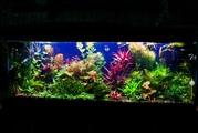 Удобрения(микро,  макро,  калий,  железо) для аквариумных растений. П0чт)