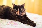 Мишель- яркая кошка красавица