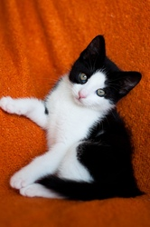 Лили- супер котёнок