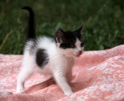 Уголёк и Дана- супер котята