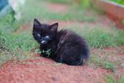 Очень красивые котята в дар!