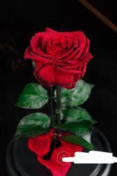 Роза в Колбе Premium 28 см