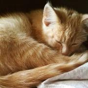 Котёнок Том в добрые руки