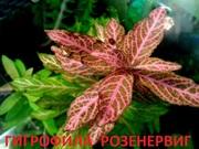Гигрофила розенервиг. Наборы растений для запуска и перезапуска аквари