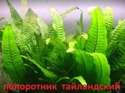 Папоротник тайландский. Наборы растений для запуска и перезапуска аква