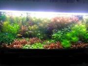 Удобрения(микро,  макро,  калий,  железо) для аквариумных растений=. ПОЧТ