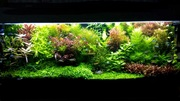 Удобрения(микро,  макро,  калий,  железо) для аквариумных растений. ПОЧт3