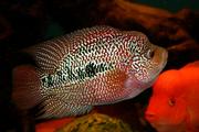 Рыба дешевле чем у всех ! Продажа рыбы в розницу по оптовым ценам...1