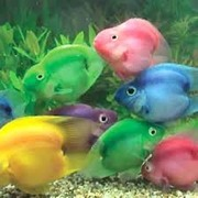 Продажа рыбы в розницу по оптовым ценам )  Рыба дешевле чем у всех !)