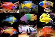 Очень много рыбы - дешевле чем у всех...