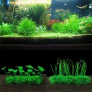 Растения Аквариумные  без Удобрений