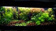 Удобрения - микро,  макро,  калий,  железо,  для аквариумных растений