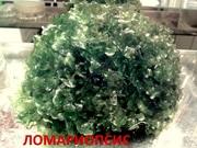 Ломариопсис папоротник. Наборы растений для запуска и перезапуска аква