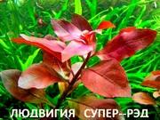 Людвигия СУПЕР -- РЭД. Наборы растений для ЗАПУСКА и перезапуска/