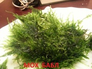Мох бабл. НАБОРЫ растений для ЗАПУСКА и ПЕРЕЗАПУСКА аква/