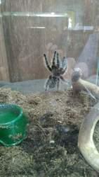 Продается  выставка  экзотических  живых  пауков и насекомых