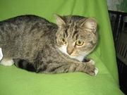 Кэти - кошка для души