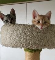 3 месячные котята в дар